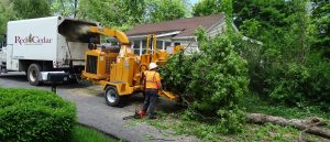 Leander Tree Services